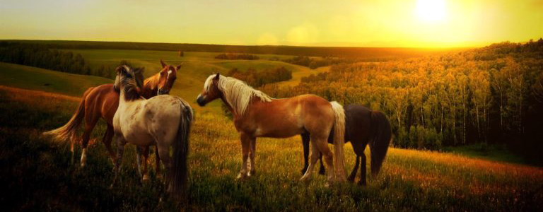 Horses in the country at sunset