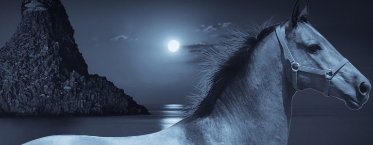 Grey horse with moonlight ocean and mountain.