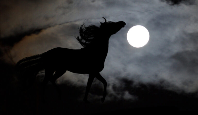 Silhouette of a horse in the dark under a full moon da